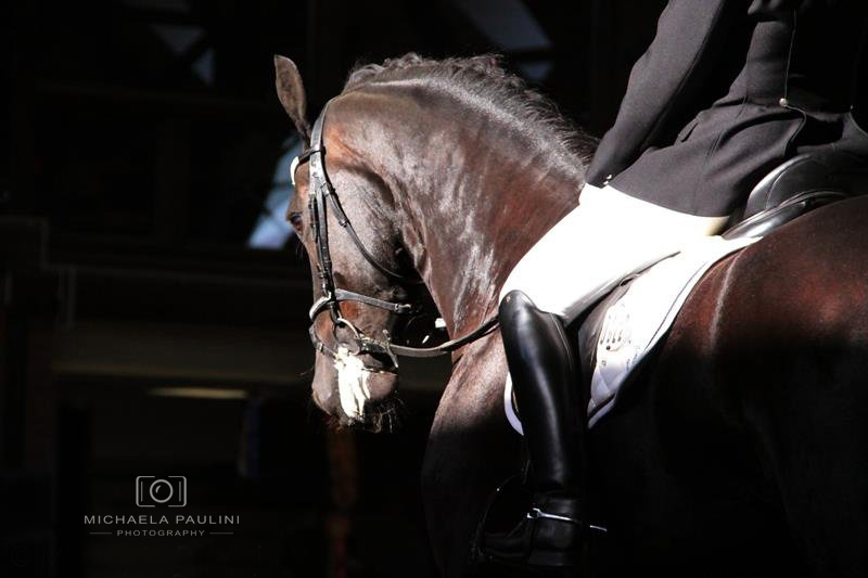 Svod Fríských koní